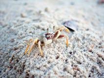 Spookkrab op zandig strand Stock Fotografie