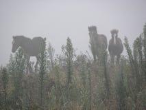 Spookpaarden in de mist stock fotografie