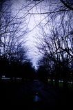 Spooky Alley. A dark spooky alley overshadowed with trees Royalty Free Stock Photography