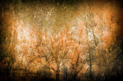 Spooky art grunge background with trees Stock Image