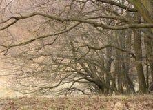 Spooky autumn trees Stock Photo