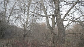 Spooky autumn trees stock video