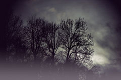 Spooky bare trees Stock Photo