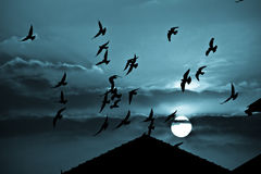 Spooky blue sunset and birds Stock Photos