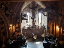 Spooky chamber. Full of stuffed animals in Pomeranian Dukes' Castle Museum in Darłowo, Poland stock image