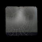 Spooky cobweb Stock Image