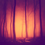 Spooky color light woods Royalty Free Stock Photography