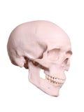 Spooky cranium Stock Image