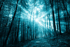 Spooky dark blue colored sunlight in forest landscape Royalty Free Stock Photo
