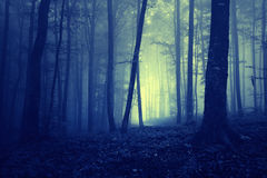 Spooky dark blue saturated foggy forest landscape Royalty Free Stock Photos
