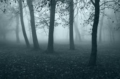 Spooky dark forest Royalty Free Stock Image