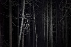 Spooky dark forest Royalty Free Stock Photography
