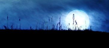 Spooky Dark Landscape. Spooky Dark Silhouette with Big Bright Moon stock photos