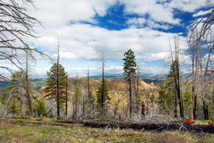 Spooky dead tree forest in Bryce Canyon National Park Royalty Free Stock Photos