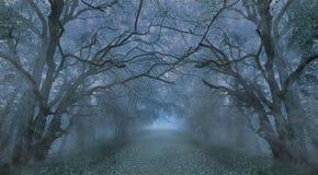 Spooky Halloween misty foggy forest night