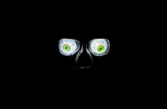 Spooky Eyes. Glowing eyes in a skull lit in the dark Royalty Free Stock Photo