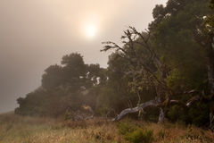 Spooky foggy forest Stock Photography