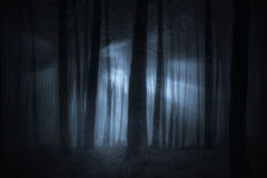 Spooky foggy forest. At night or dusk with light beams royalty free stock images