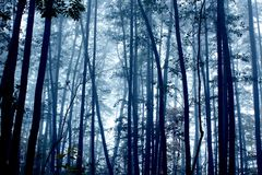 Spooky foggy mystic dark forest Stock Image