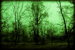 Spooky Foggy Woods. Leafless trees look spooky in a green, foggy wooded area; perfect for Halloween; supernatural look Stock Photography