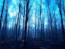 Spooky forest. Blue hued forest view, Hampshire, UK Royalty Free Stock Photo