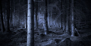Spooky forest. Spooky blue forest with dry trees royalty free stock images