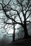 Spooky Forest. Trees in dark wood stock photo