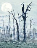 Spooky forest. With dry trees and moon stock photos