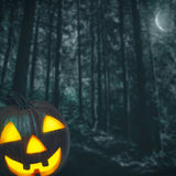 Spooky forest. Royalty Free Stock Image