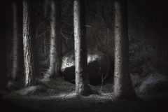 Spooky forest Royalty Free Stock Images