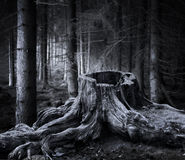 Spooky forest with dry tree stump Royalty Free Stock Photos