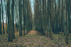 Spooky Forest. Fallen leaves. Creepy forest Stock Photo
