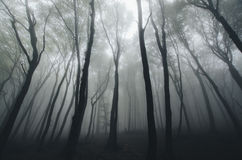 Spooky forest with fog Stock Images