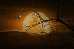 Spooky forest with full moon, dead trees and bird, Halloween bac Royalty Free Stock Images