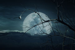 Spooky forest with full moon, dead trees, Halloween background. Spooky forest with full moon, dead trees and birds, Halloween background Stock Images