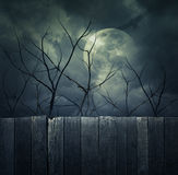 Spooky forest with full moon, dead trees, Halloween background. Spooky forest with full moon, dead trees and birds, Halloween background stock photo