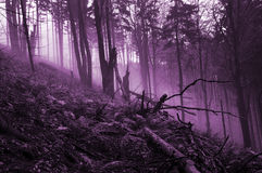 Spooky forest haunted Stock Photos