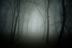 Spooky forest. The haunted forest from Romania, Cluj-Napoca Royalty Free Stock Photo