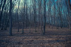 Spooky Forest Landscape Stock Photography