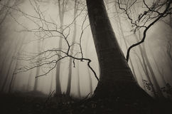 Spooky forest landscape with old tree on Halloween Royalty Free Stock Image