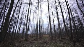 Spooky forest in late autumn stock video footage