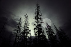 Spooky forest Stock Photography