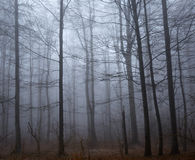 Spooky forest and mist Royalty Free Stock Photos