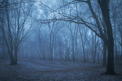 Spooky forest night. Spooky forest a foggy night. Blue toned photo stock image