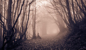 Spooky forest with path of Monte Catria. Marche - Italy Royalty Free Stock Photography