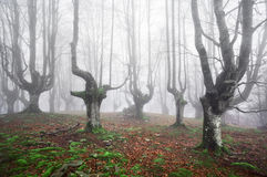 Spooky forest. With scary trees royalty free stock images