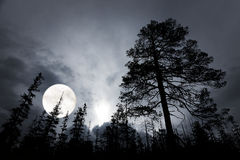 Spooky forest with silhouettes of trees Stock Photo