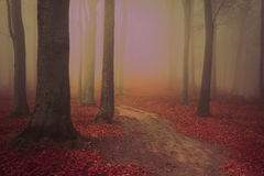 Spooky forest during a strange fairytale fog Stock Photography