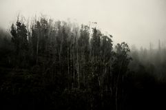 Spooky forest. Forest submerged in fog on the island of Tenerife Royalty Free Stock Photo