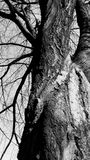 Spooky forest tree. In black and white stock photo